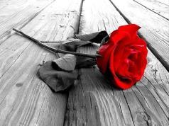 BSL rose